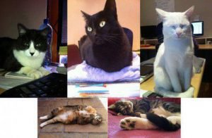 Office-cats-1-e1429102129635222
