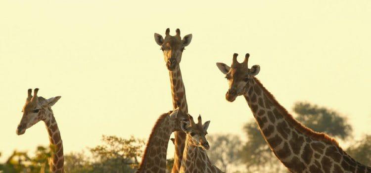 Tour Operators: How to leverage social media