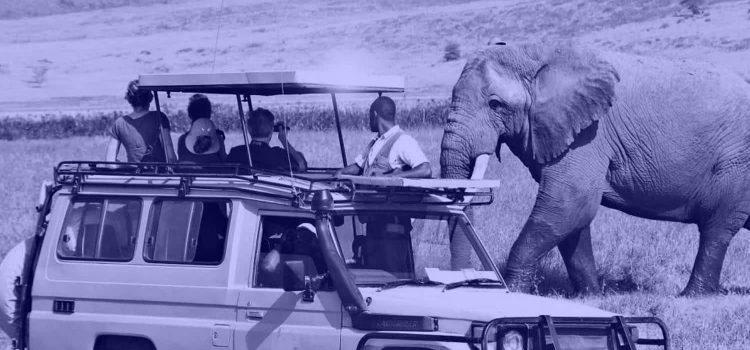 Tour Operator Websites: Conversion Optimization