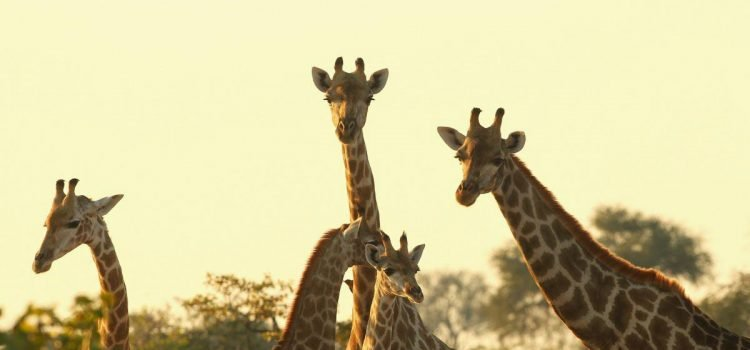 Tour Operators: How to leverage social media