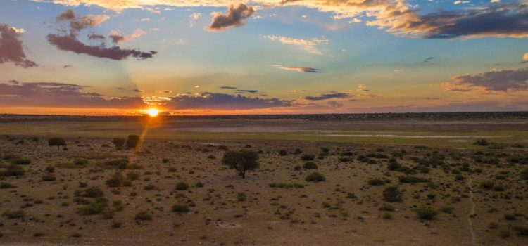 How to Join and Benefit from Safari Bookings